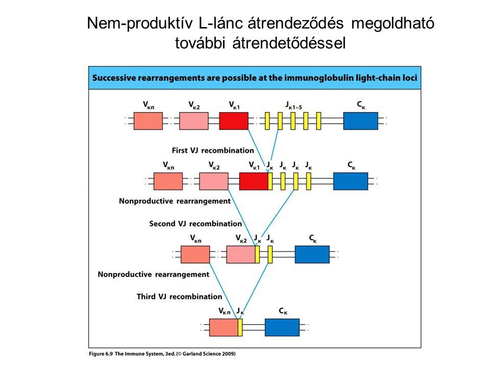 Nem-produktív L-lánc átrendeződés megoldható további átrendetődéssel
