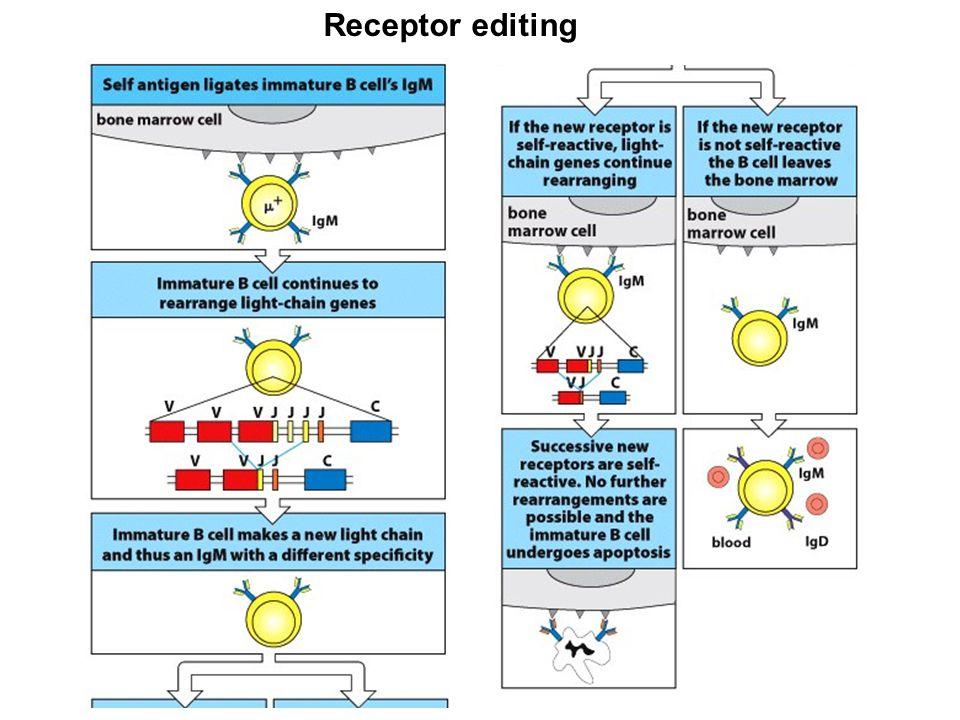 Receptor editing