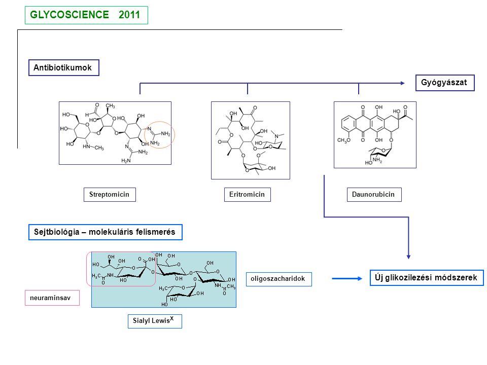 Antibiotikumok Streptomicin Eritromicin Daunorubicin Sejtbiológia – molekuláris felismerés Sialyl Lewis X neuraminsav oligoszacharidok Új glikozilezés