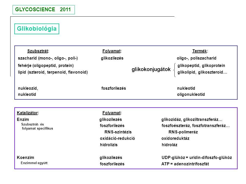 Glikobiológia Szubsztrát: Folyamat: Termék: szacharid (mono-, oligo-, poli-) glikozilezés oligo-, poliszacharid fehérje (oligopeptid, protein) glikope