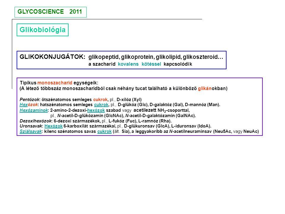 Glikobiológia GLIKOKONJUGÁTOK: glikopeptid, glikoprotein, glikolipid, glikoszteroid… a szacharid kovalens kötéssel kapcsolódik Tipikus monoszacharid e