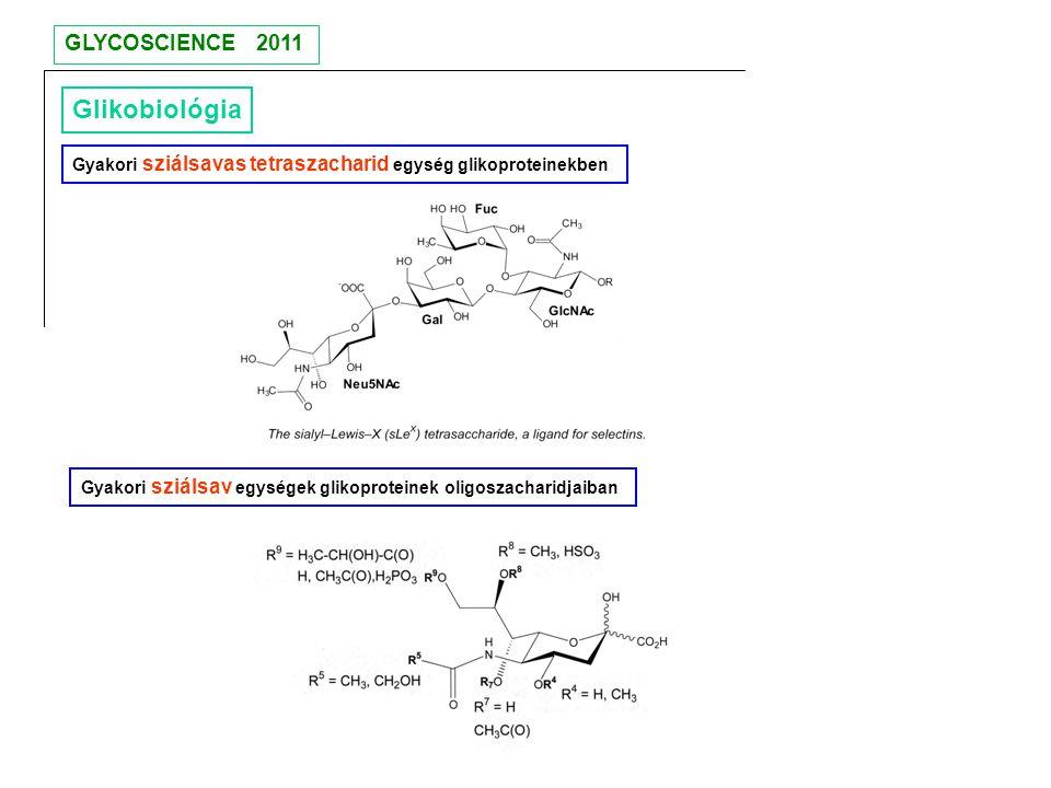 Glikobiológia Gyakori sziálsavas tetraszacharid egység glikoproteinekben Gyakori sziálsav egységek glikoproteinek oligoszacharidjaiban GLYCOSCIENCE 20