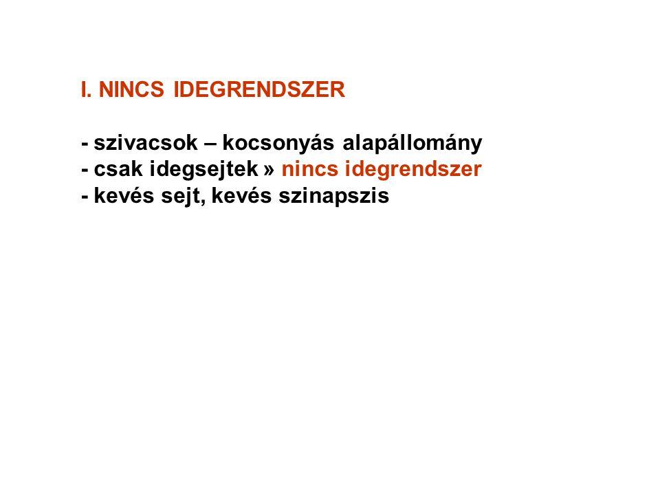 I. NINCS IDEGRENDSZER - szivacsok – kocsonyás alapállomány - csak idegsejtek » nincs idegrendszer - kevés sejt, kevés szinapszis