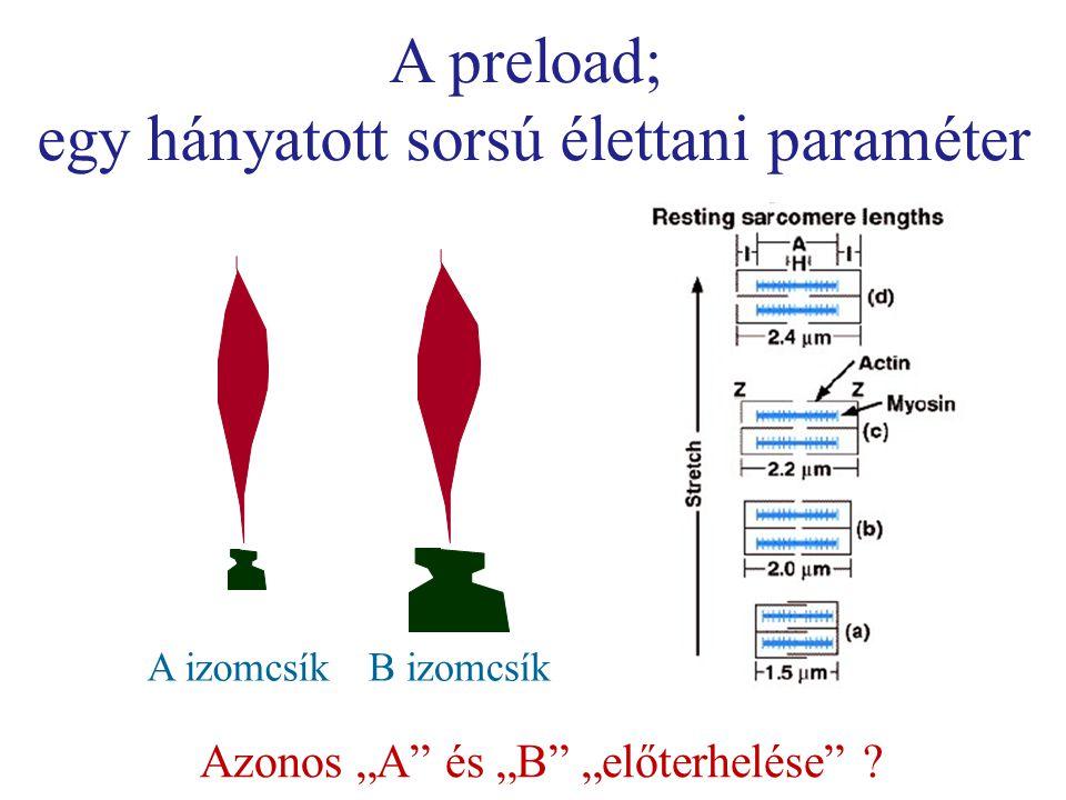 """A preload; egy hányatott sorsú élettani paraméter A izomcsíkB izomcsík Azonos """"A és """"B """"előterhelése"""
