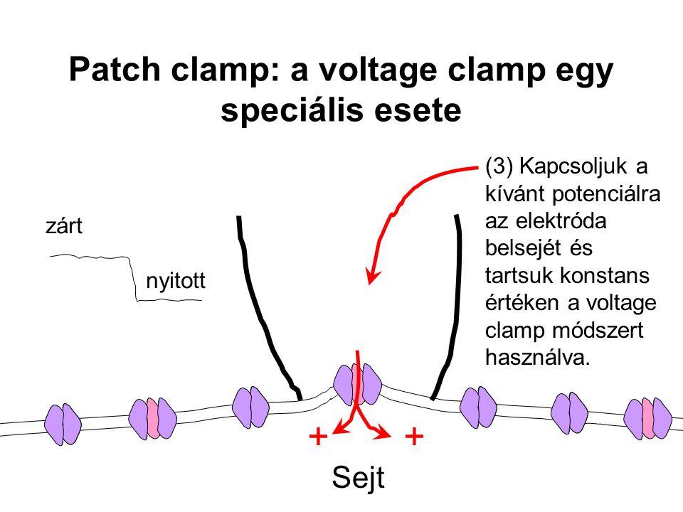zárt nyitott Sejt + (3) Kapcsoljuk a kívánt potenciálra az elektróda belsejét és tartsuk konstans értéken a voltage clamp módszert használva. Patch cl