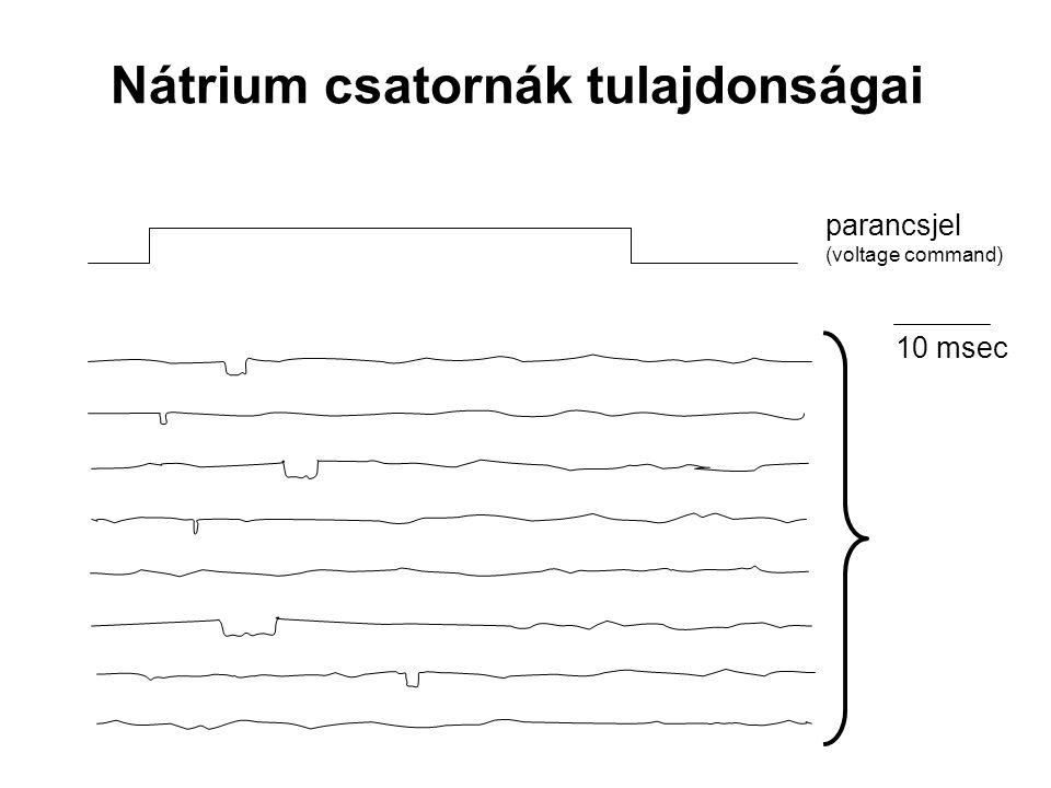 Nátrium csatornák tulajdonságai parancsjel (voltage command) 10 msec