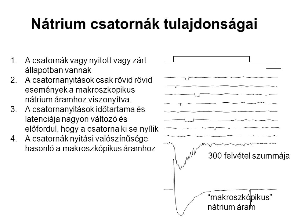 Nátrium csatornák tulajdonságai 1.A csatornák vagy nyitott vagy zárt állapotban vannak 2.A csatornanyitások csak rövid rövid események a makroszkopiku