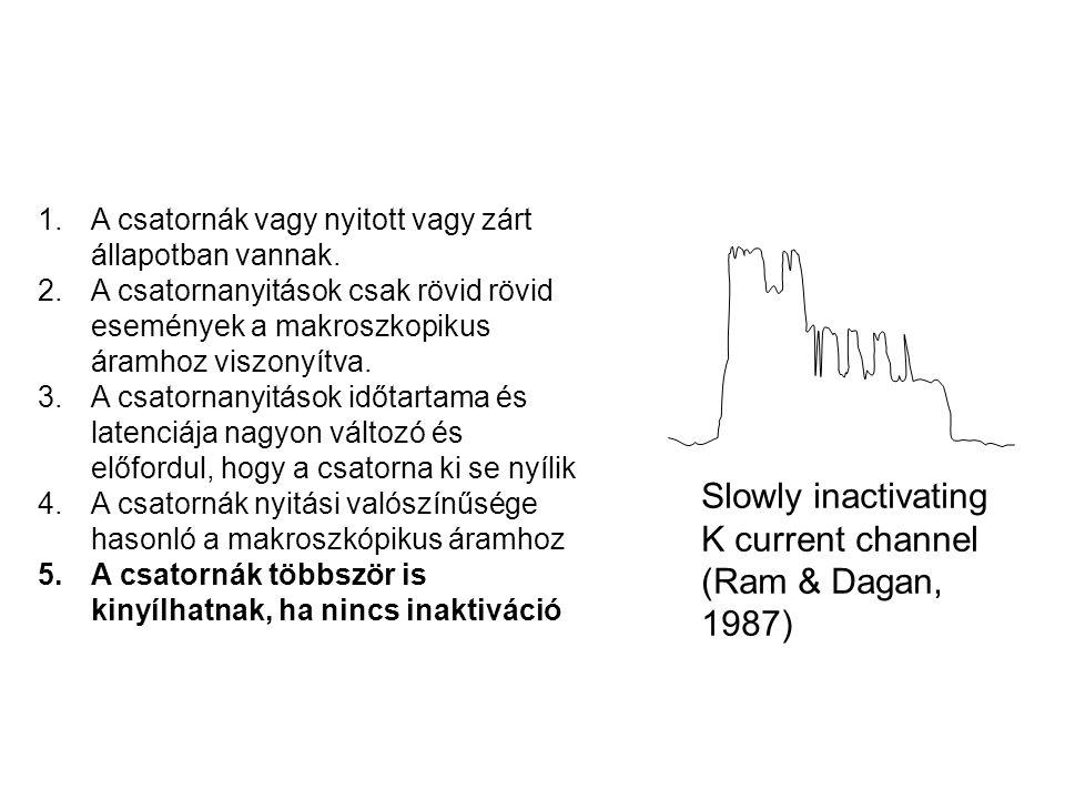 Slowly inactivating K current channel (Ram & Dagan, 1987) 1.A csatornák vagy nyitott vagy zárt állapotban vannak. 2.A csatornanyitások csak rövid rövi