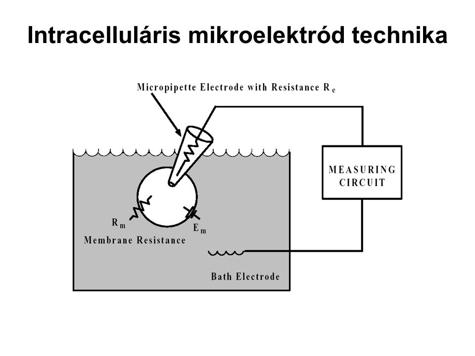 Intracelluláris mikroelektród technika