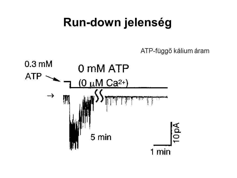 Run-down jelenség ATP-függő kálium áram