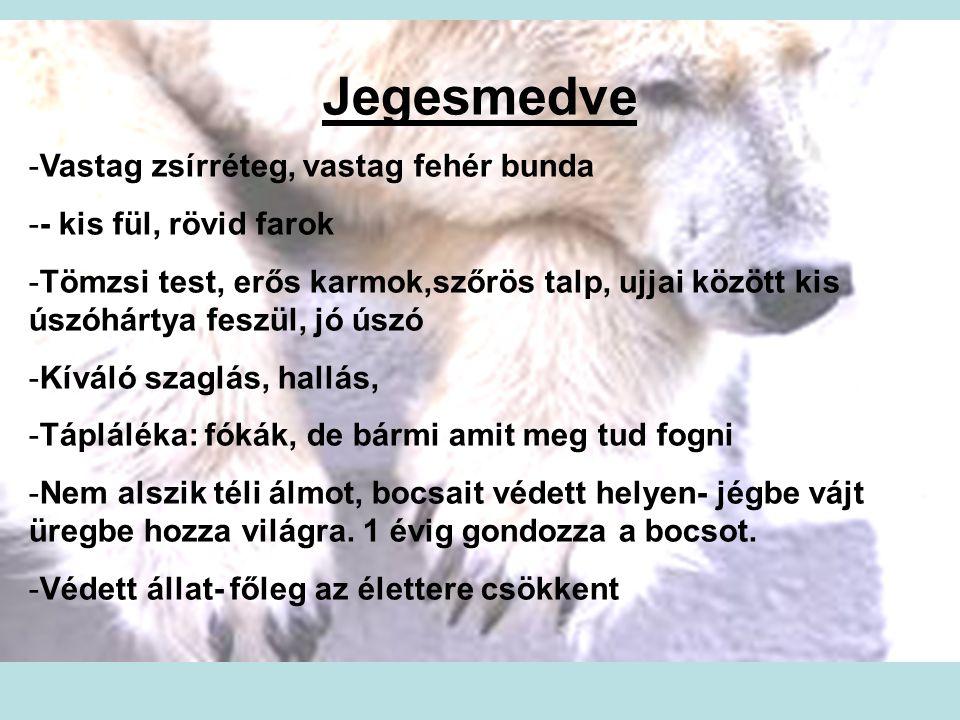 Jegesmedve -Vastag zsírréteg, vastag fehér bunda -- kis fül, rövid farok -Tömzsi test, erős karmok,szőrös talp, ujjai között kis úszóhártya feszül, jó