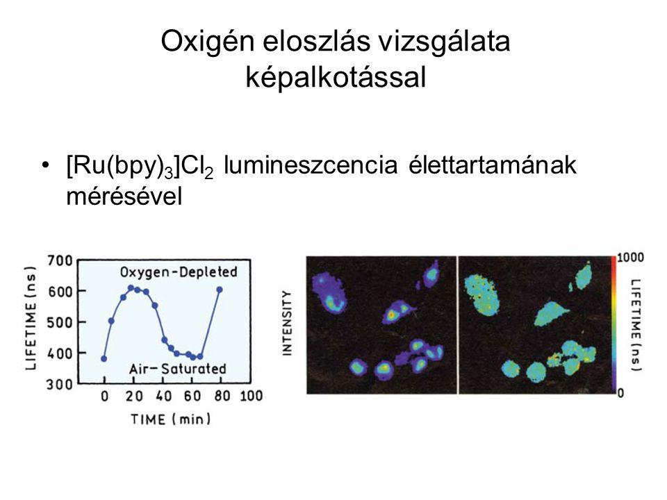 [Ru(bpy) 3 ]Cl 2 lumineszcencia élettartamának mérésével Oxigén eloszlás vizsgálata képalkotással