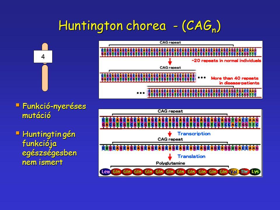Huntington chorea - (CAG n )  Funkció-nyeréses mutáció mutáció  Huntingtin gén funkciója funkciója egészségesben egészségesben nem ismert nem ismert