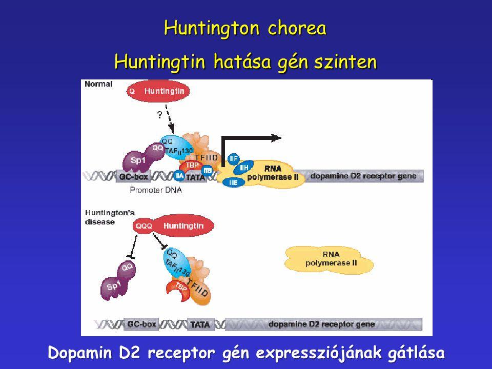 Huntington chorea Huntingtin hatása gén szinten Dopamin D2 receptor gén expressziójának gátlása
