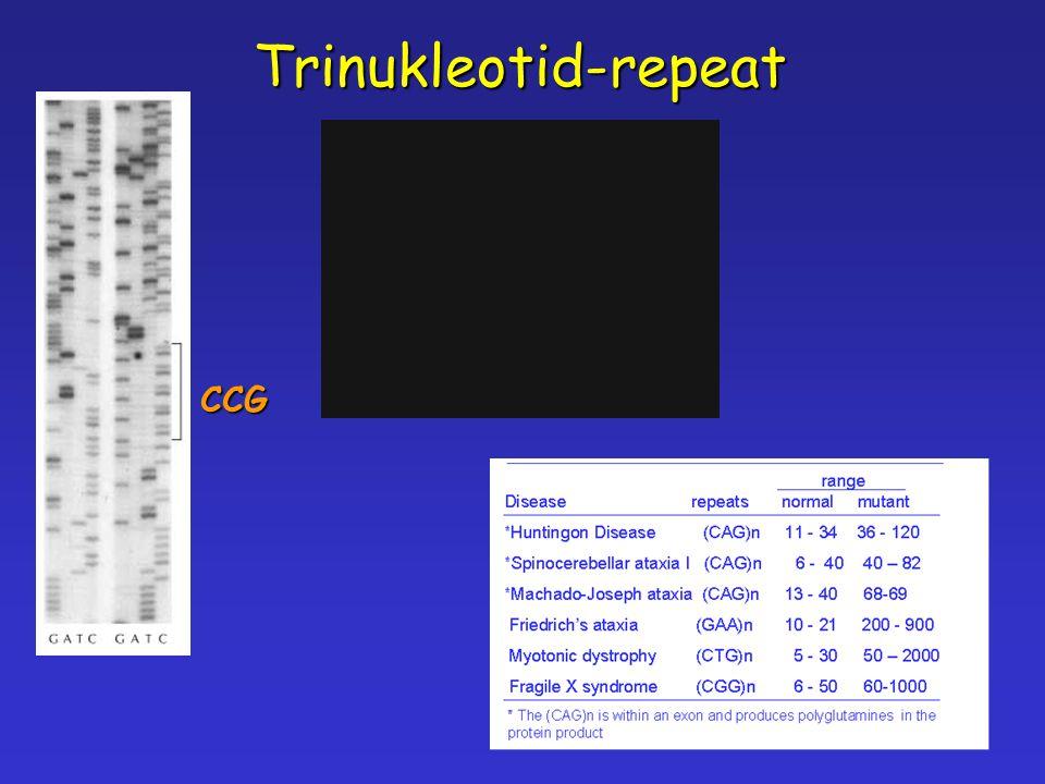 Trinukleotid-repeatCCG