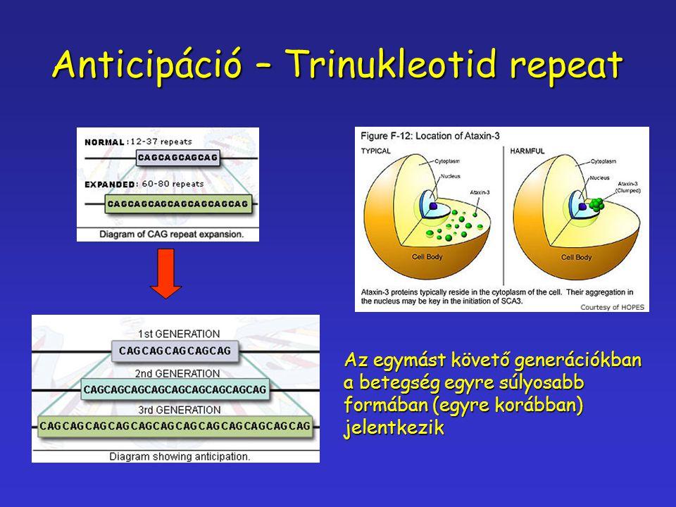 Anticipáció – Trinukleotid repeat Az egymást követő generációkban a betegség egyre súlyosabb formában (egyre korábban) jelentkezik