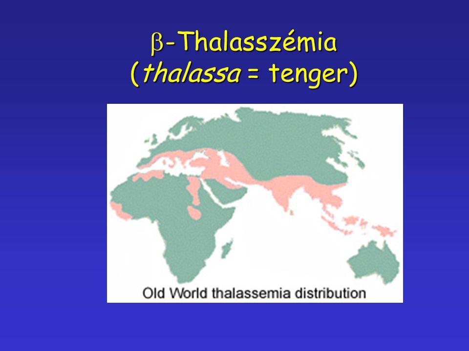  -Thalasszémia (thalassa = tenger)