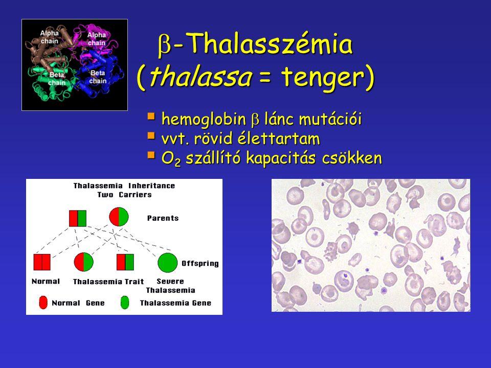  -Thalasszémia (thalassa = tenger)  hemoglobin  lánc mutációi  vvt. rövid élettartam  O 2 szállító kapacitás csökken
