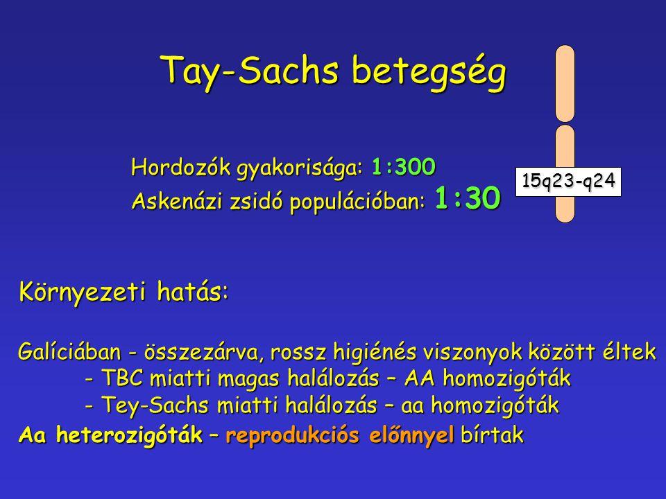 Tay-Sachs betegség Hordozók gyakorisága: 1:300 Askenázi zsidó populációban: 1:30 Környezeti hatás: Galíciában - összezárva, rossz higiénés viszonyok k