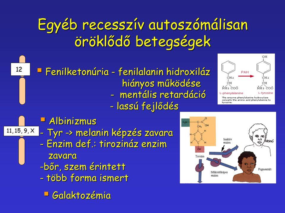 Egyéb recesszív autoszómálisan öröklődő betegségek  Fenilketonúria - fenilalanin hidroxiláz hiányos működése - mentális retardáció - mentális retardá