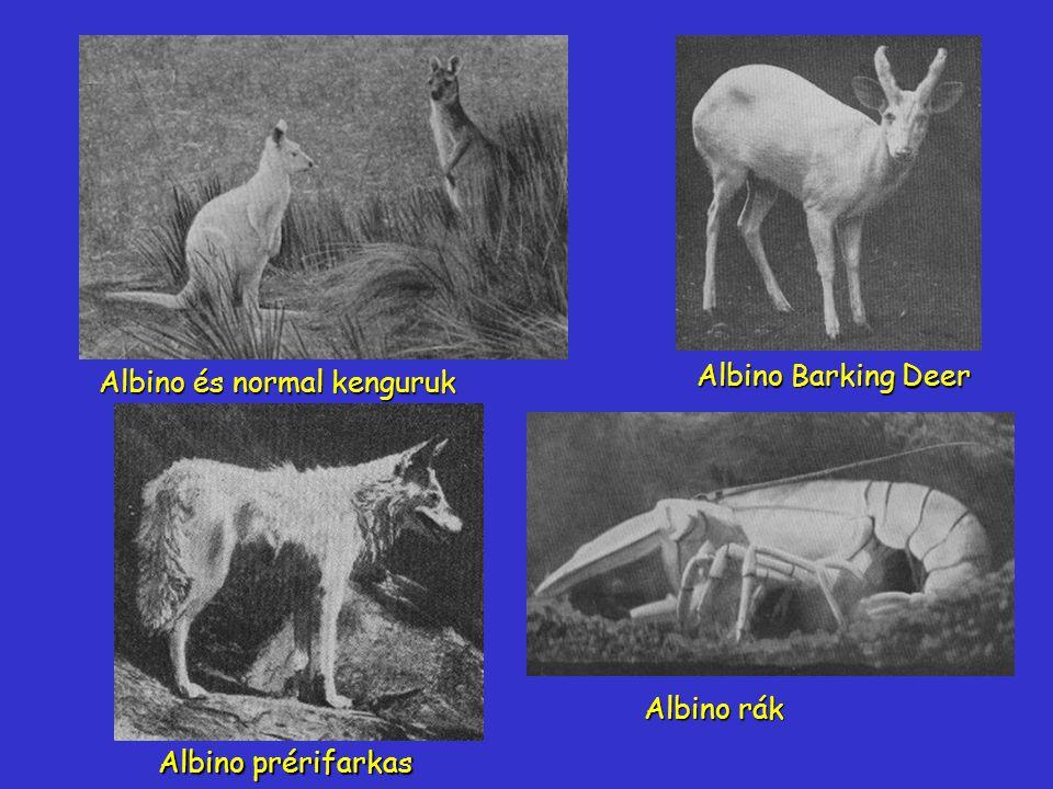 Albino Barking Deer Albino és normal kenguruk Albino prérifarkas Albino rák