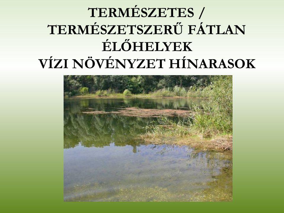 MOCSÁRRÉTEK Tömegesen megjelenő, nagytermetű, széles levelű fűfajai a fehér tippan (Agrostis alba), réti ecsetpázsit (Alopecurus pratensis), gyepes sédbúza (Deschampsia caespitosa), réti csenkesz (Festuca pratensis), nádképű csenkesz (F.