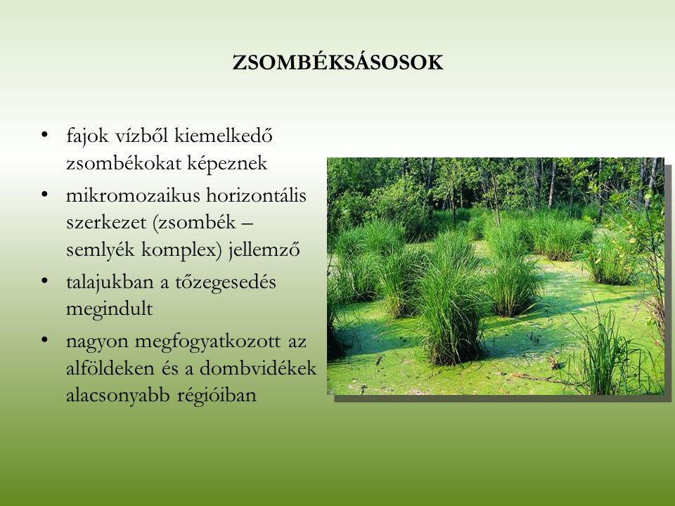 ZSOMBÉKSÁSOSOK fajok vízből kiemelkedő zsombékokat képeznek mikromozaikus horizontális szerkezet (zsombék – semlyék komplex) jellemző talajukban a tőz