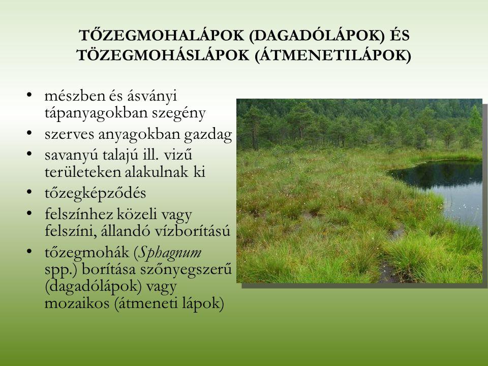 TŐZEGMOHALÁPOK (DAGADÓLÁPOK) ÉS TÖZEGMOHÁSLÁPOK (ÁTMENETILÁPOK) mészben és ásványi tápanyagokban szegény szerves anyagokban gazdag savanyú talajú ill.