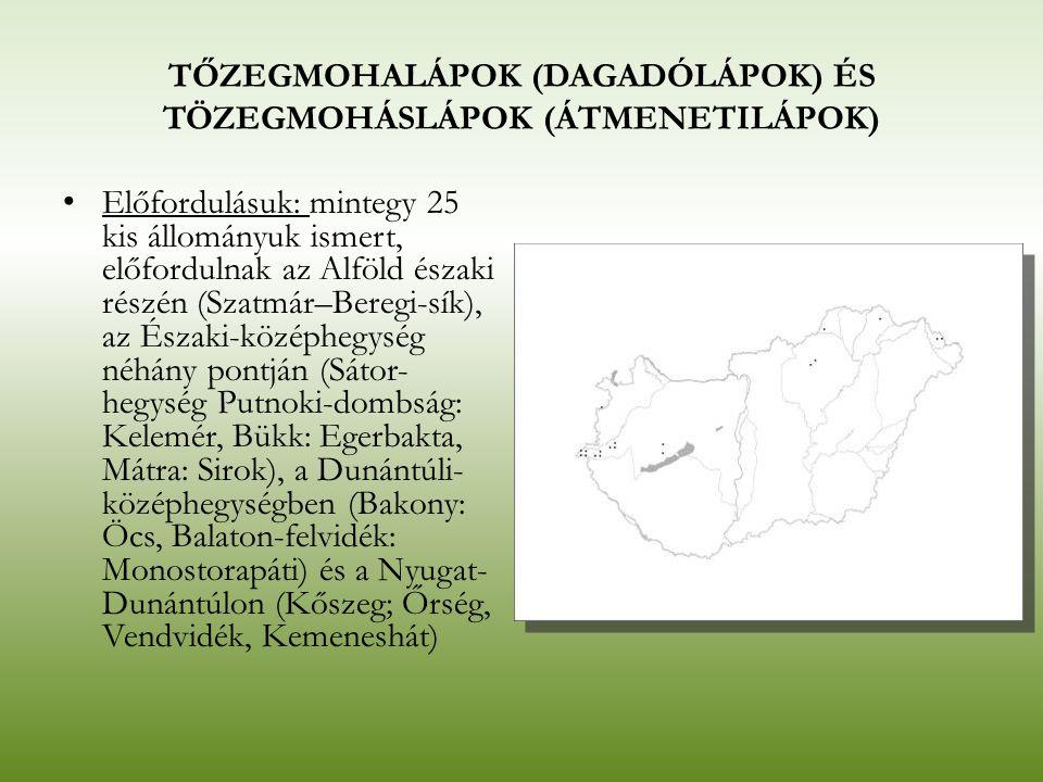 TŐZEGMOHALÁPOK (DAGADÓLÁPOK) ÉS TÖZEGMOHÁSLÁPOK (ÁTMENETILÁPOK) Előfordulásuk: mintegy 25 kis állományuk ismert, előfordulnak az Alföld északi részén