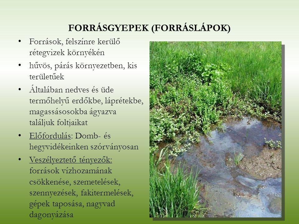 FORRÁSGYEPEK (FORRÁSLÁPOK) Források, felszínre kerülő rétegvizek környékén hűvös, párás környezetben, kis területűek Általában nedves és üde termőhely