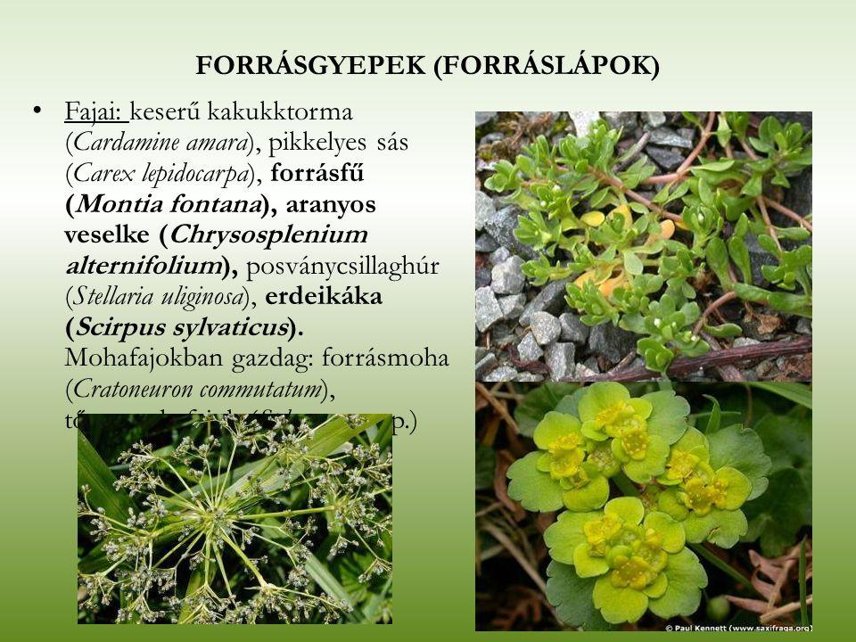 FORRÁSGYEPEK (FORRÁSLÁPOK) Fajai: keserű kakukktorma (Cardamine amara), pikkelyes sás (Carex lepidocarpa), forrásfű (Montia fontana), aranyos veselke
