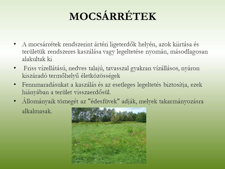 MOCSÁRRÉTEK A mocsárrétek rendszerint ártéri ligeterdők helyén, azok kiirtása és területük rendszeres kaszálása vagy legeltetése nyomán, másodlagosan