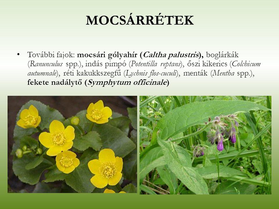 MOCSÁRRÉTEK További fajok: mocsári gólyahír (Caltha palustris), boglárkák (Ranunculus spp.), indás pimpó (Potentilla reptans), őszi kikerics (Colchicu