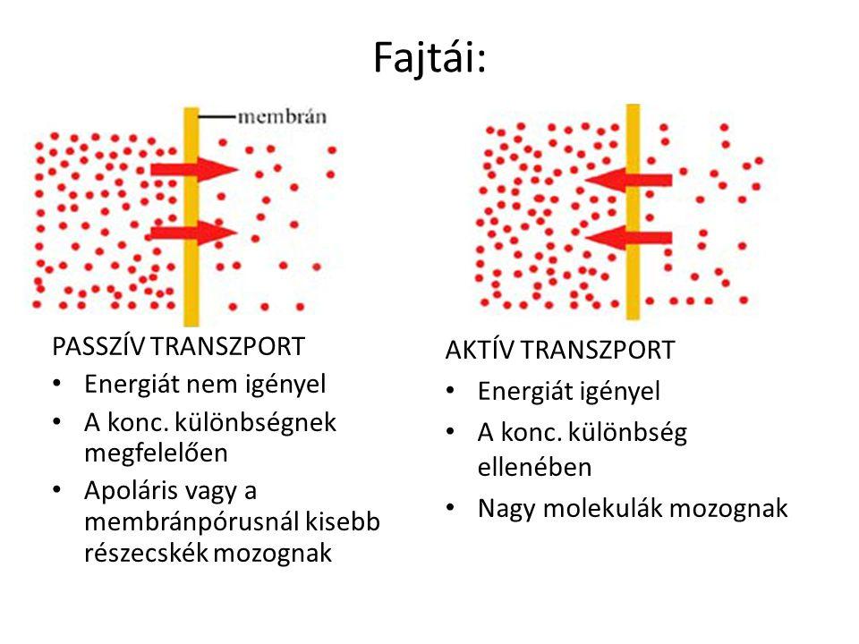 Fajtái: PASSZÍV TRANSZPORT Energiát nem igényel A konc. különbségnek megfelelően Apoláris vagy a membránpórusnál kisebb részecskék mozognak AKTÍV TRAN