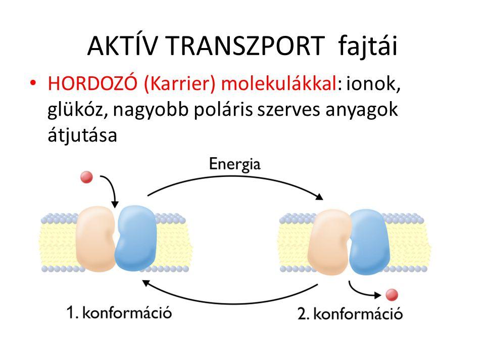 AKTÍV TRANSZPORT fajtái HORDOZÓ (Karrier) molekulákkal: ionok, glükóz, nagyobb poláris szerves anyagok átjutása