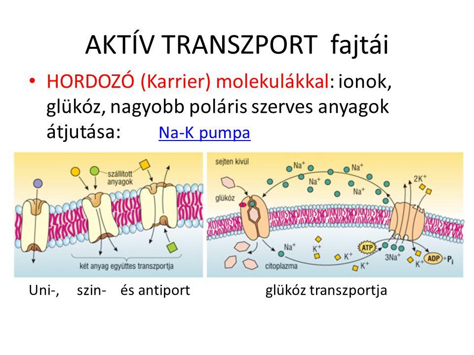 AKTÍV TRANSZPORT fajtái HORDOZÓ (Karrier) molekulákkal: ionok, glükóz, nagyobb poláris szerves anyagok átjutása: Na-K pumpa Na-K pumpa Uni-, szin- és