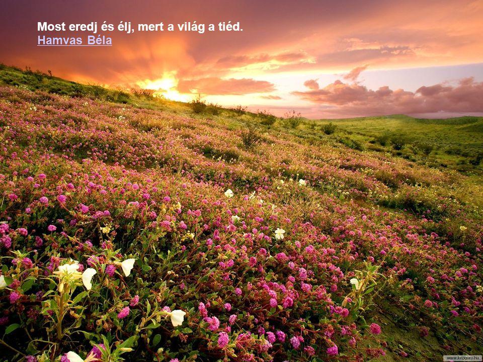 """"""" Az élet egyetlen célja, hogy azok legyünk, akik vagyunk, és azzá legyünk, akik lehetünk. Robert Louis Stevenson"""
