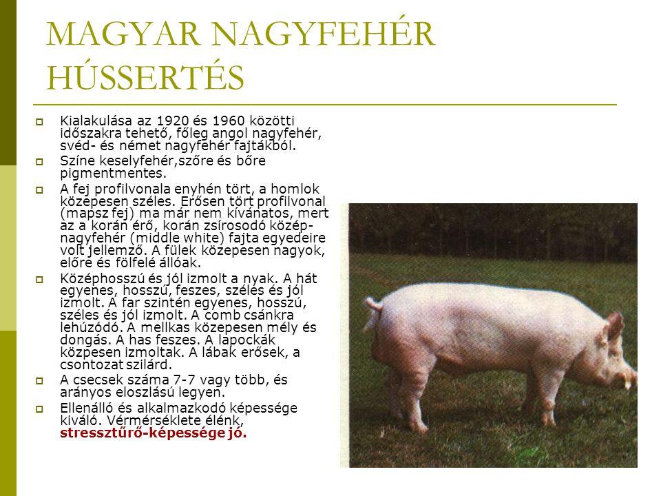 MAGYAR NAGYFEHÉR HÚSSERTÉS  Kialakulása az 1920 és 1960 közötti időszakra tehető, főleg angol nagyfehér, svéd- és német nagyfehér fajtákból.
