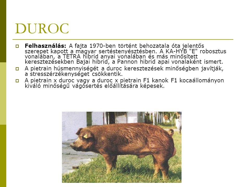 DUROC  Felhasználás: A fajta 1970-ben történt behozatala óta jelentős szerepet kapott a magyar sertéstenyésztésben.