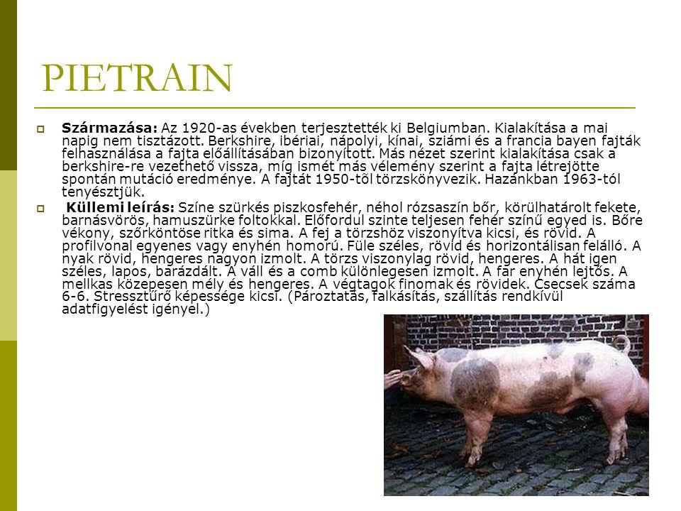 PIETRAIN  Származása: Az 1920-as években terjesztették ki Belgiumban.