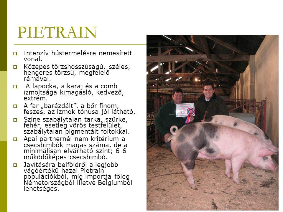 PIETRAIN  Intenzív hústermelésre nemesített vonal.