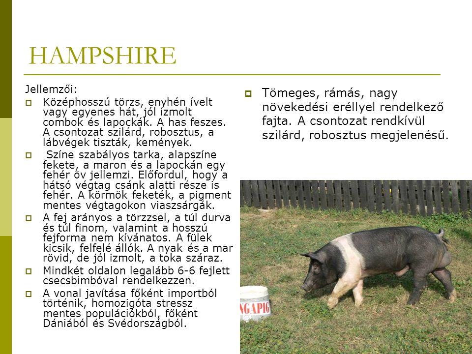 HAMPSHIRE Jellemzői:  Középhosszú törzs, enyhén ívelt vagy egyenes hát, jól izmolt combok és lapockák.