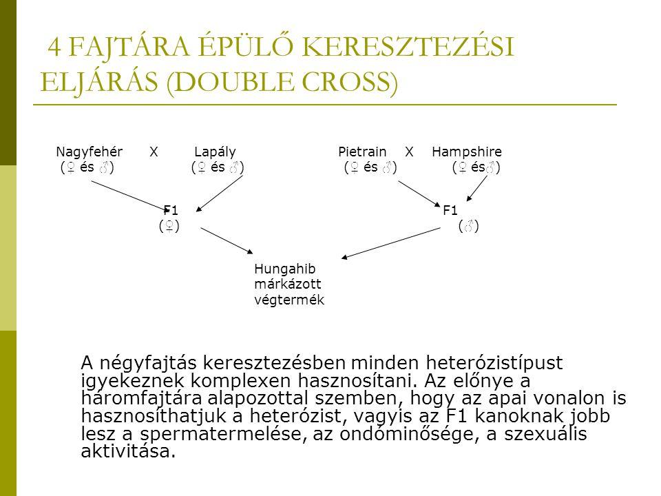 4 FAJTÁRA ÉPÜLŐ KERESZTEZÉSI ELJÁRÁS (DOUBLE CROSS) Nagyfehér X Lapály Pietrain X Hampshire ( ♀ és ♂ ) ( ♀ és ♂ ) ( ♀ és ♂ ) ( ♀ és ♂ ) F1 F1 ( ♀ ) ( ♂ ) Hungahib márkázott végtermék A négyfajtás keresztezésben minden heterózistípust igyekeznek komplexen hasznosítani.