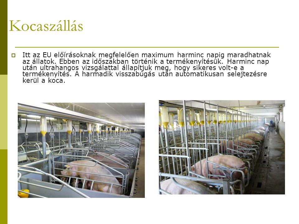 Kocaszállás  Itt az EU előírásoknak megfelelően maximum harminc napig maradhatnak az állatok.