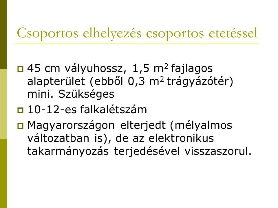 Csoportos elhelyezés csoportos etetéssel  45 cm vályuhossz, 1,5 m 2 fajlagos alapterület (ebből 0,3 m 2 trágyázótér) mini.