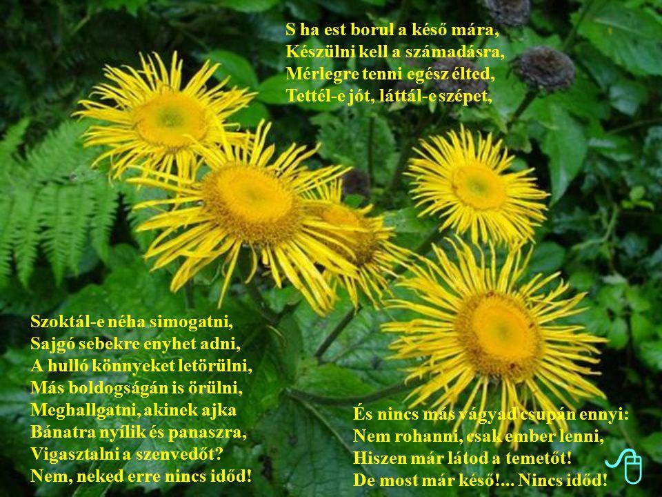 Gőzmozdonnyal a Vasér völgyében Szádeczky-Kardoss György: Nincs időd Szoktál-e néha meg-megállni, És néhány percre megcsodálni A zöld mezőt, a sok virágot, Az ezerszínű, szép világot, A dús erdőt, a zúgó fákat, A csillagfényes éjszakákat, A völgy ölét, a hegytetőt.