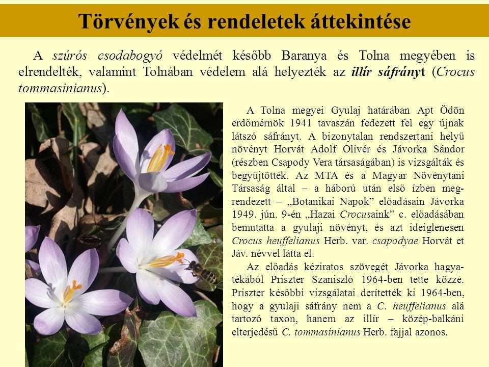 Törvények és rendeletek áttekintése A szúrós csodabogyó védelmét később Baranya és Tolna megyében is elrendelték, valamint Tolnában védelem alá helyez