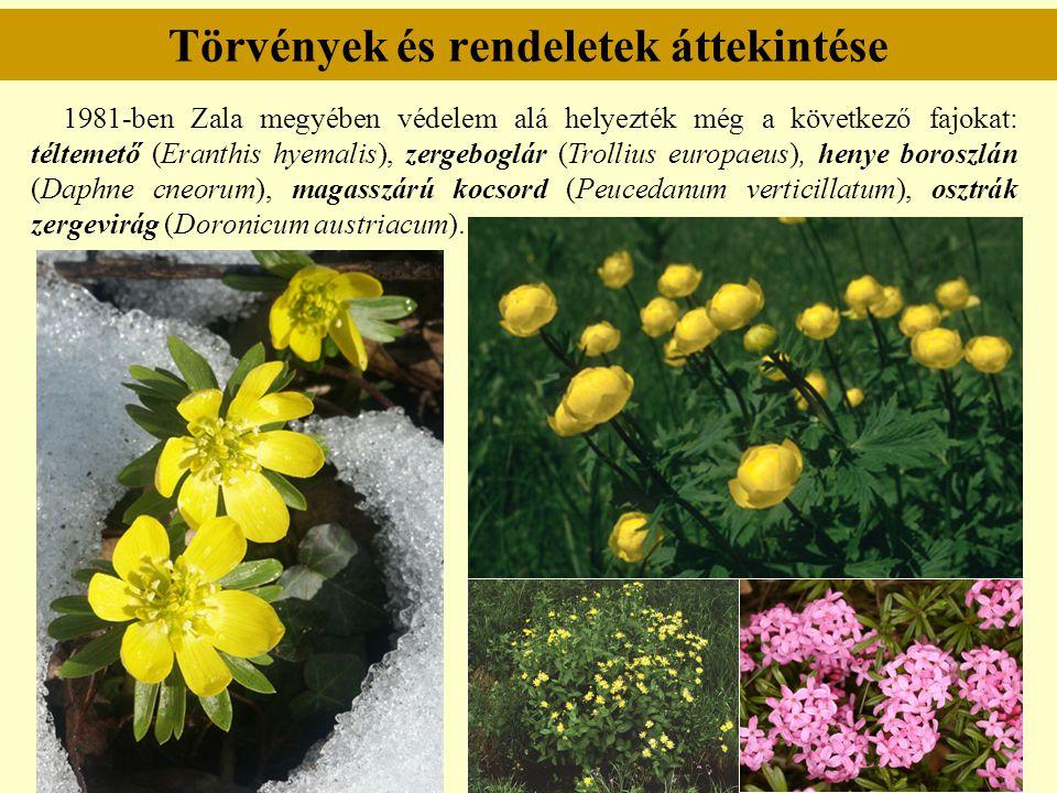 Törvények és rendeletek áttekintése 1981-ben Zala megyében védelem alá helyezték még a következő fajokat: téltemető (Eranthis hyemalis), zergeboglár (