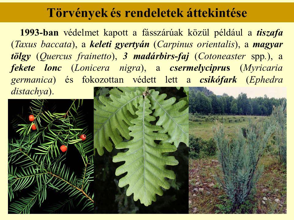 Törvények és rendeletek áttekintése 1993-ban védelmet kapott a fásszárúak közül például a tiszafa (Taxus baccata), a keleti gyertyán (Carpinus orienta