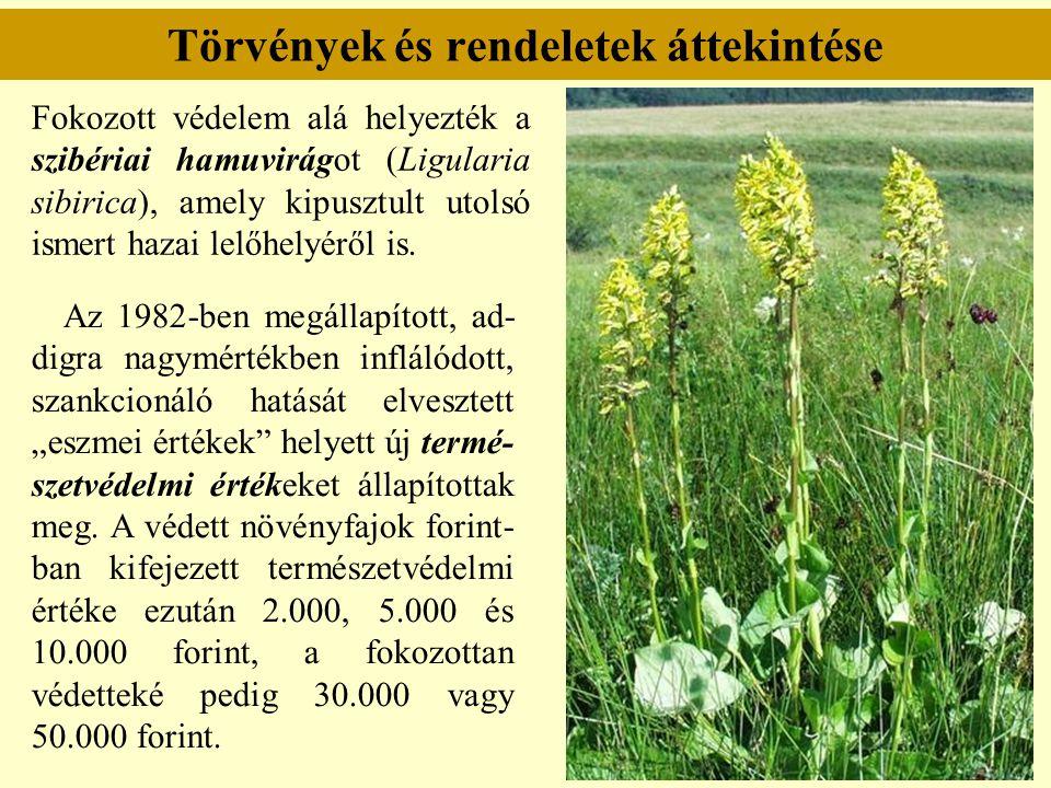 Törvények és rendeletek áttekintése Fokozott védelem alá helyezték a szibériai hamuvirágot (Ligularia sibirica), amely kipusztult utolsó ismert hazai